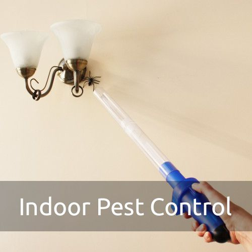 Indoor Pest Control